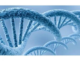 A partir del genoma completo de tres hermanos, identifican mutación de trastorno autista